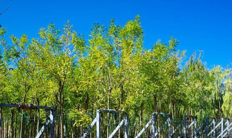 Δένδρο 3